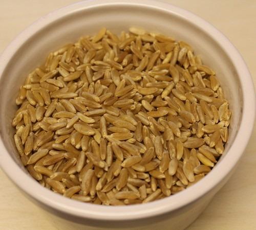 KAMUT brand Khorasan Wheat Grains