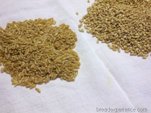 sprouted-kamut-bread 006